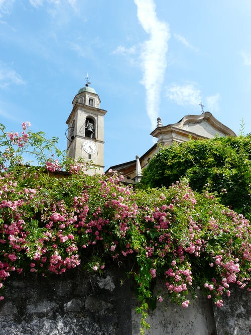 Free stock photo of italy flowers bell tower