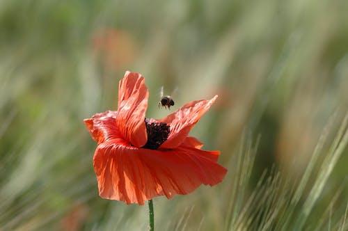 Fotobanka sbezplatnými fotkami na tému flóra, hĺbka ostrosti, hmyz