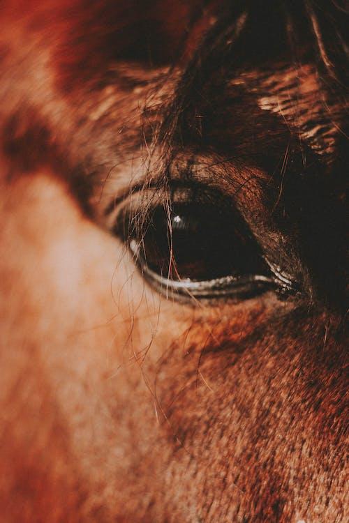 Eye of brown horse in sunlight