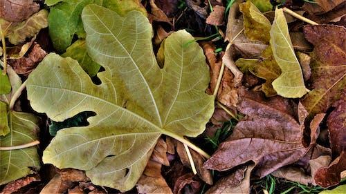 Immagine gratuita di autunno, colori, foglia, foglie