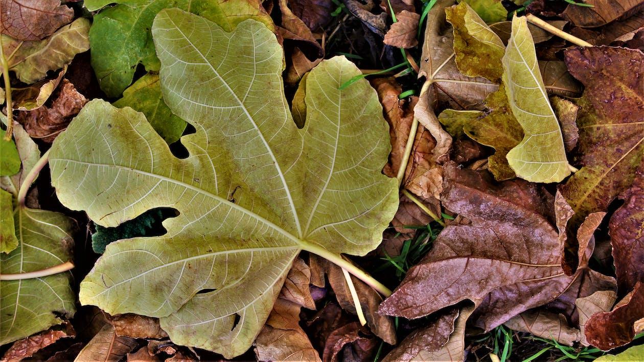 autunno, colori, foglia