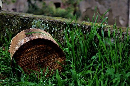 Photos gratuites de bosco, legno, natura, photo