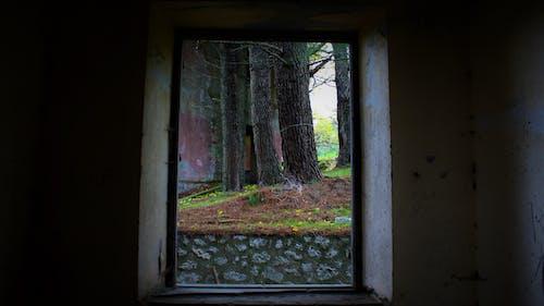 Photos gratuites de bosco, finestra, natura, ombre