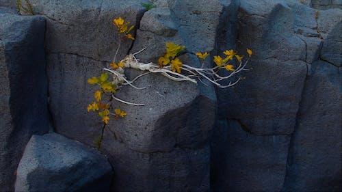 Imagine de stoc gratuită din natura, rock