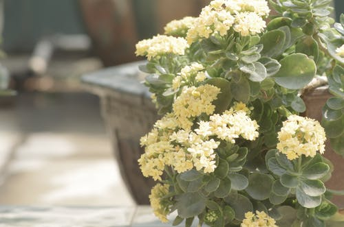 Free stock photo of morning sun, plant, yellow flowers