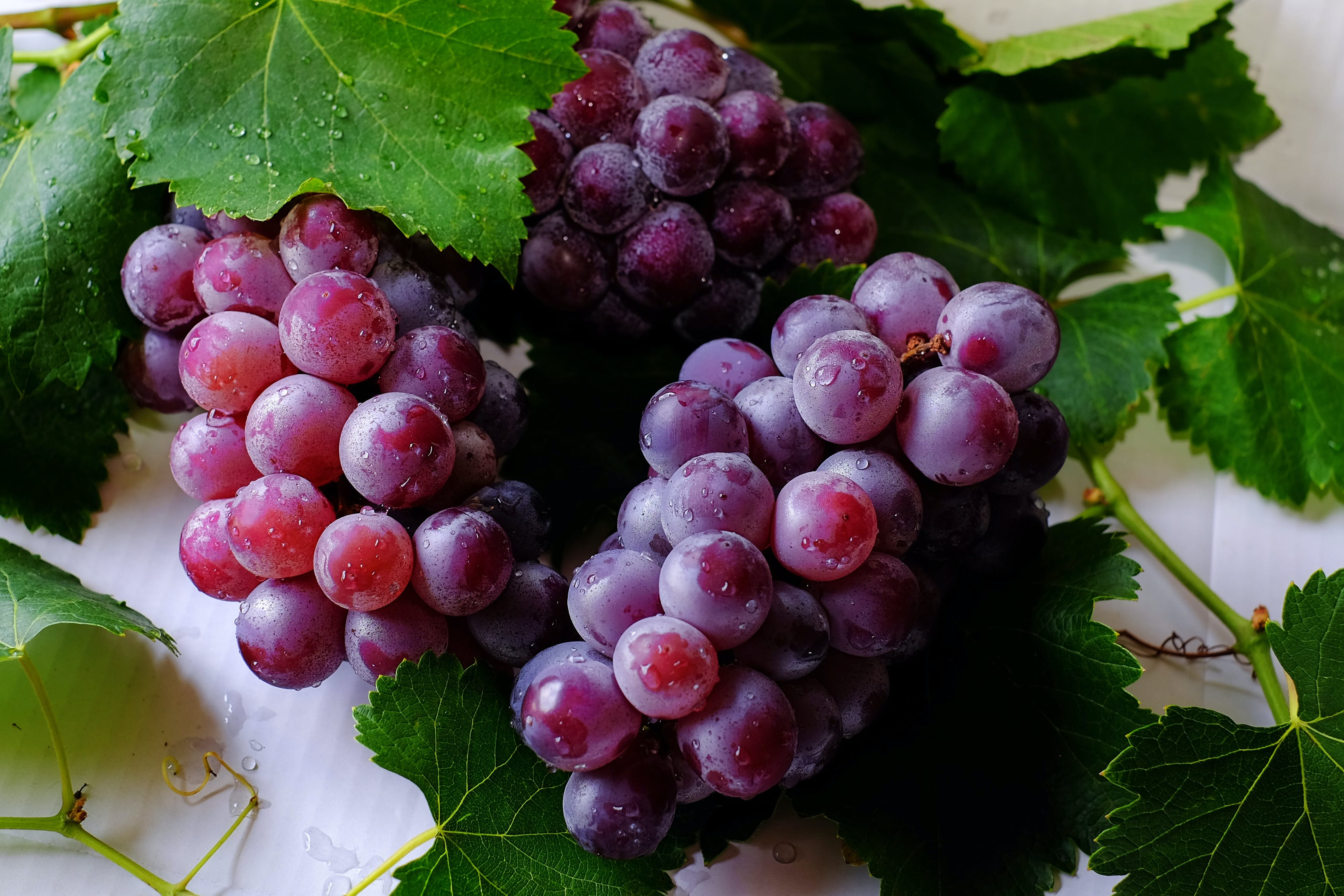 bunches of redish-purple grapes