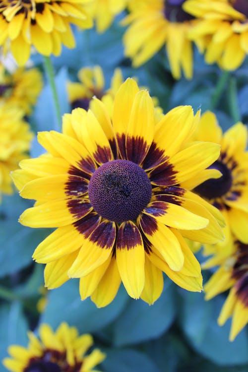 ayçiçeği, bitki örtüsü, büyüme içeren Ücretsiz stok fotoğraf