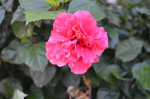 Gratis stockfoto met bloem, mooie bloemen, roze bloem