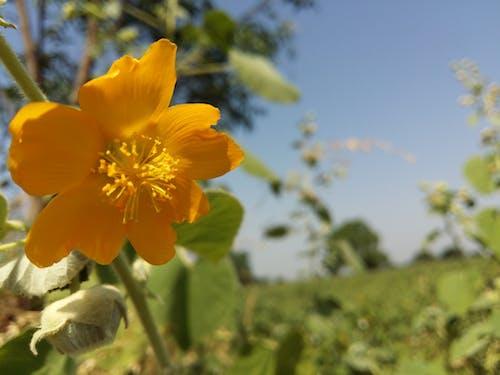 Free stock photo of beautiful flowers, farm, natural