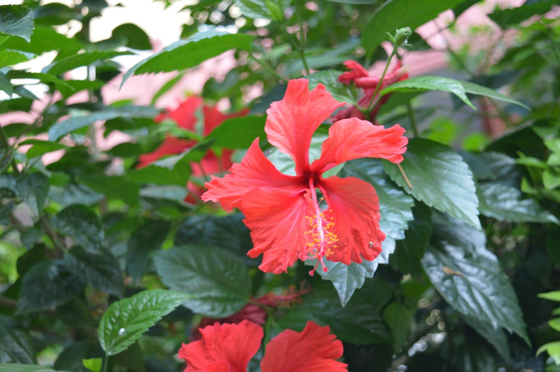 Free stock photo of flower, greenery, plant