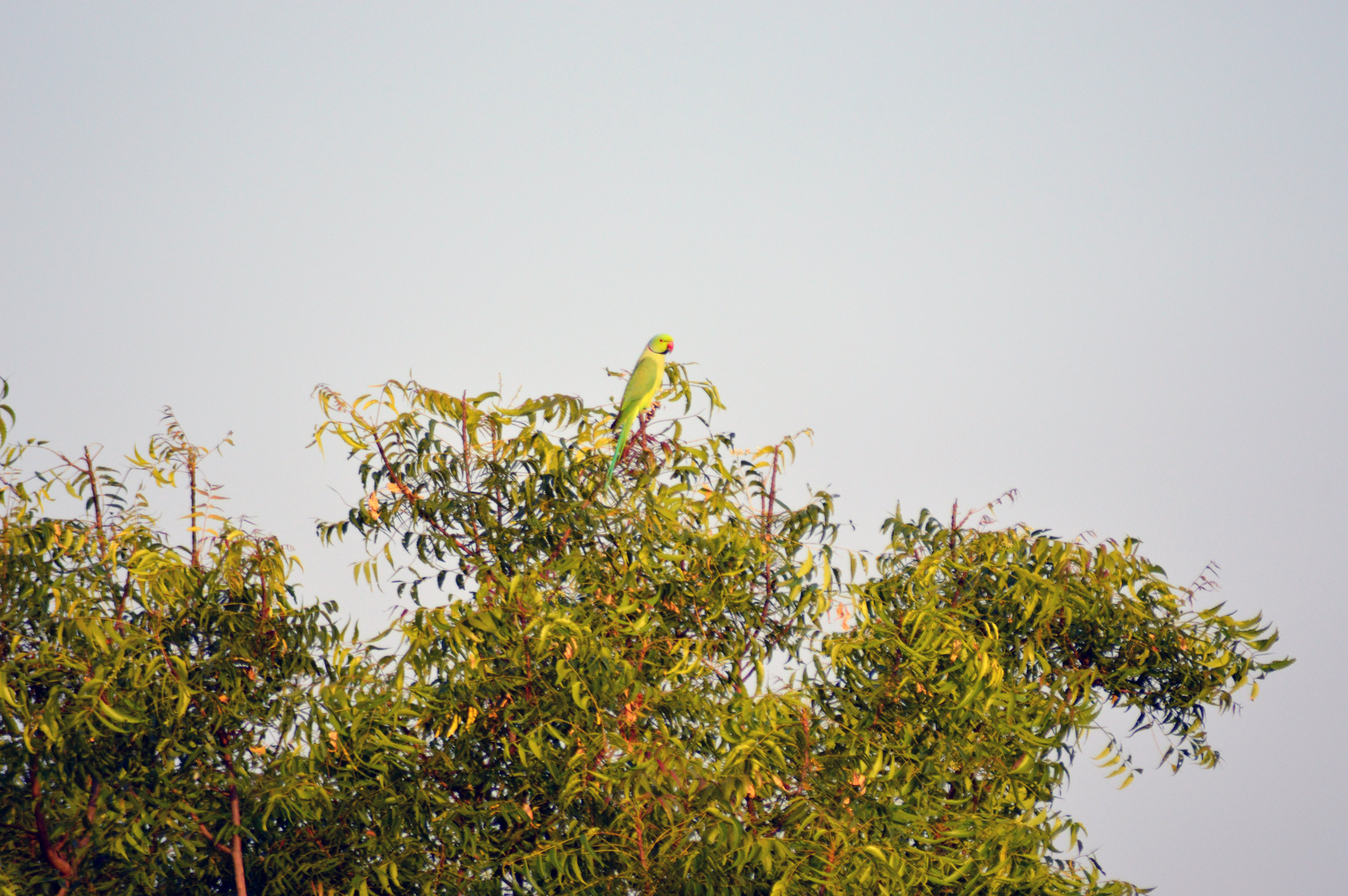 Green and Red Beaked Bird on Green Leaf Tree