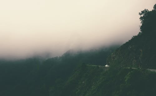 Mountain Surrounded by Trees Covered by Fog