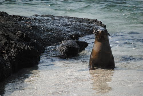 Free stock photo of sea lion