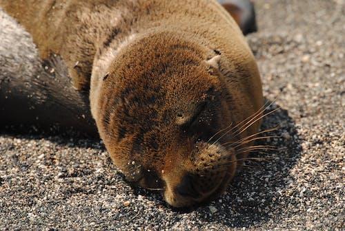 Brown Seal on Gray Sand