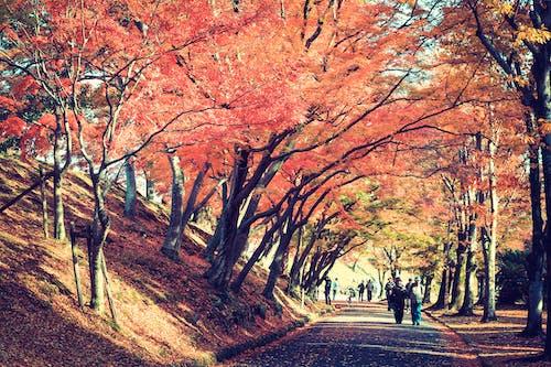 일본의의 무료 스톡 사진
