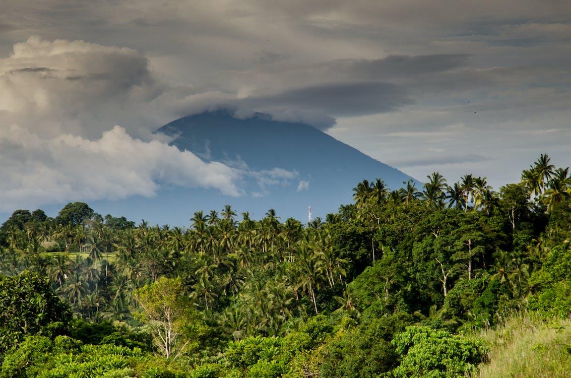 Indonesia merupakan negara penghasil karet terbesar kedua di dunia