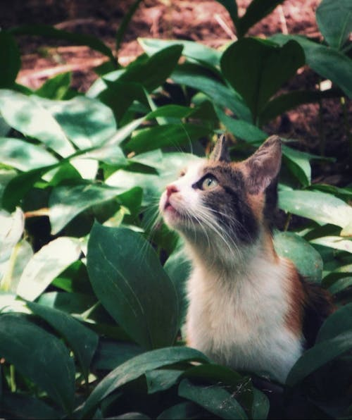 Free stock photo of animal photography, beauty in nature, cats