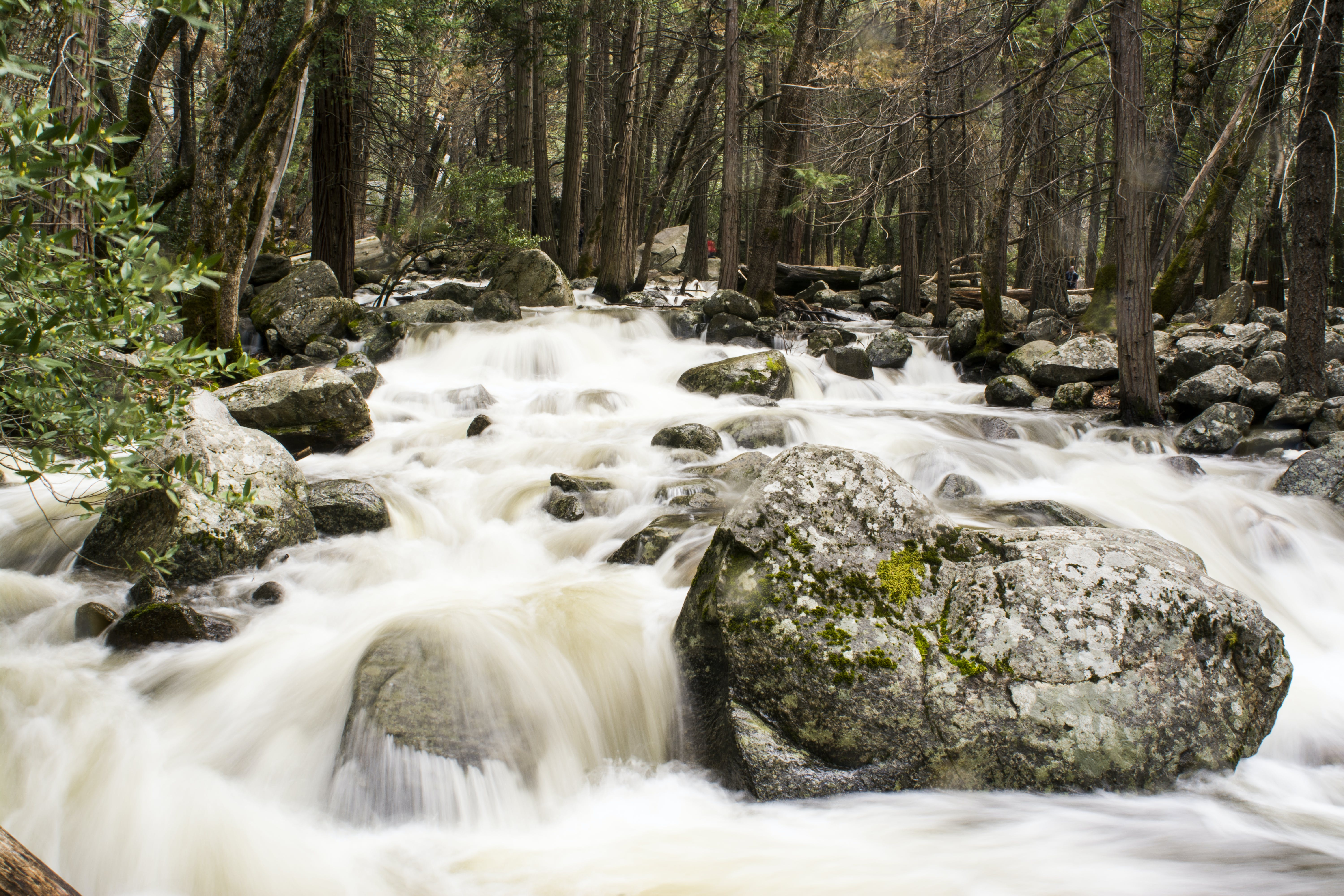 Rocks and Trees on Running Water