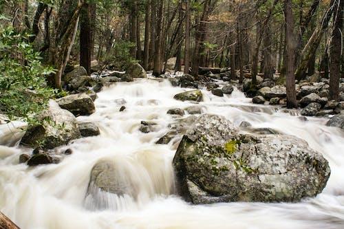 Kostnadsfri bild av bäck, långexponering, nationalpark, natur