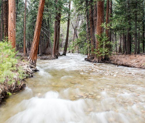 Kostnadsfri bild av bäck, grön, klart vatten, lång exponering