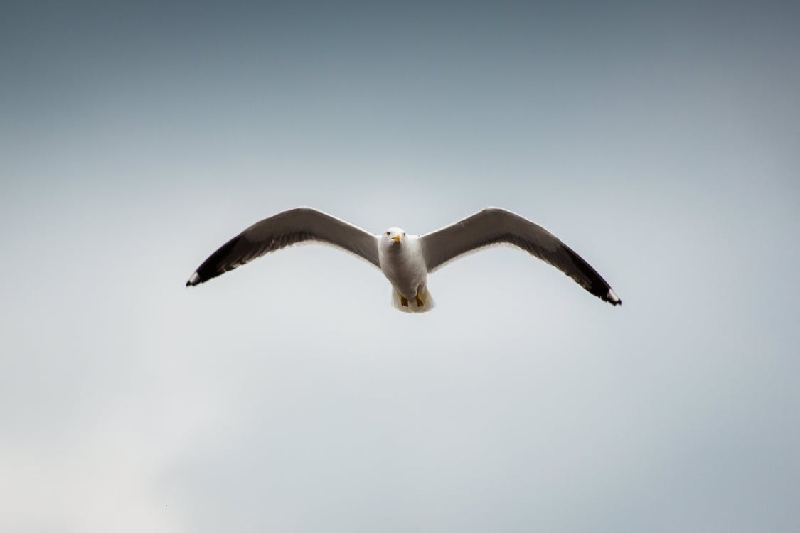 Low Angle Photography of Seagull Flying