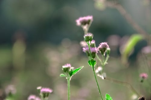 Foto profissional grátis de flora, flores, macio, macro
