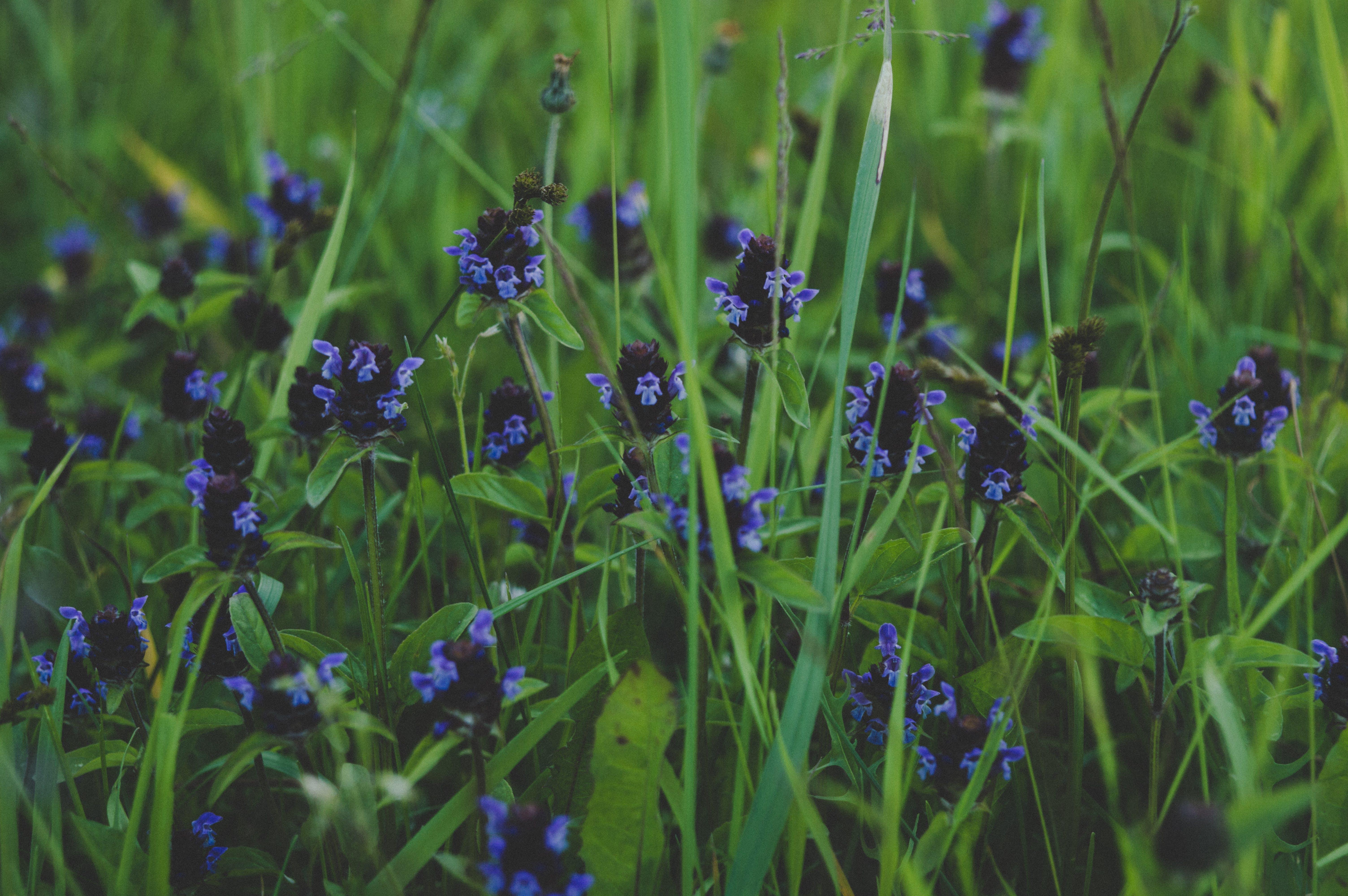 Darmowe zdjęcie z galerii z dziki, flora, kolory, kwiat