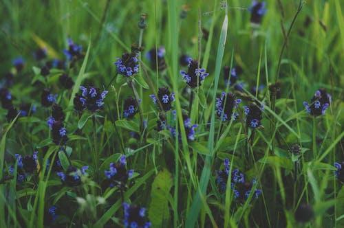 Imagine de stoc gratuită din albastru, câmp, centrale, concentrare