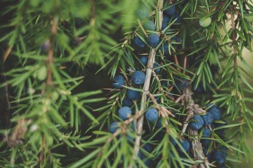 Gratis lagerfoto af bær, farver, frugter, grene