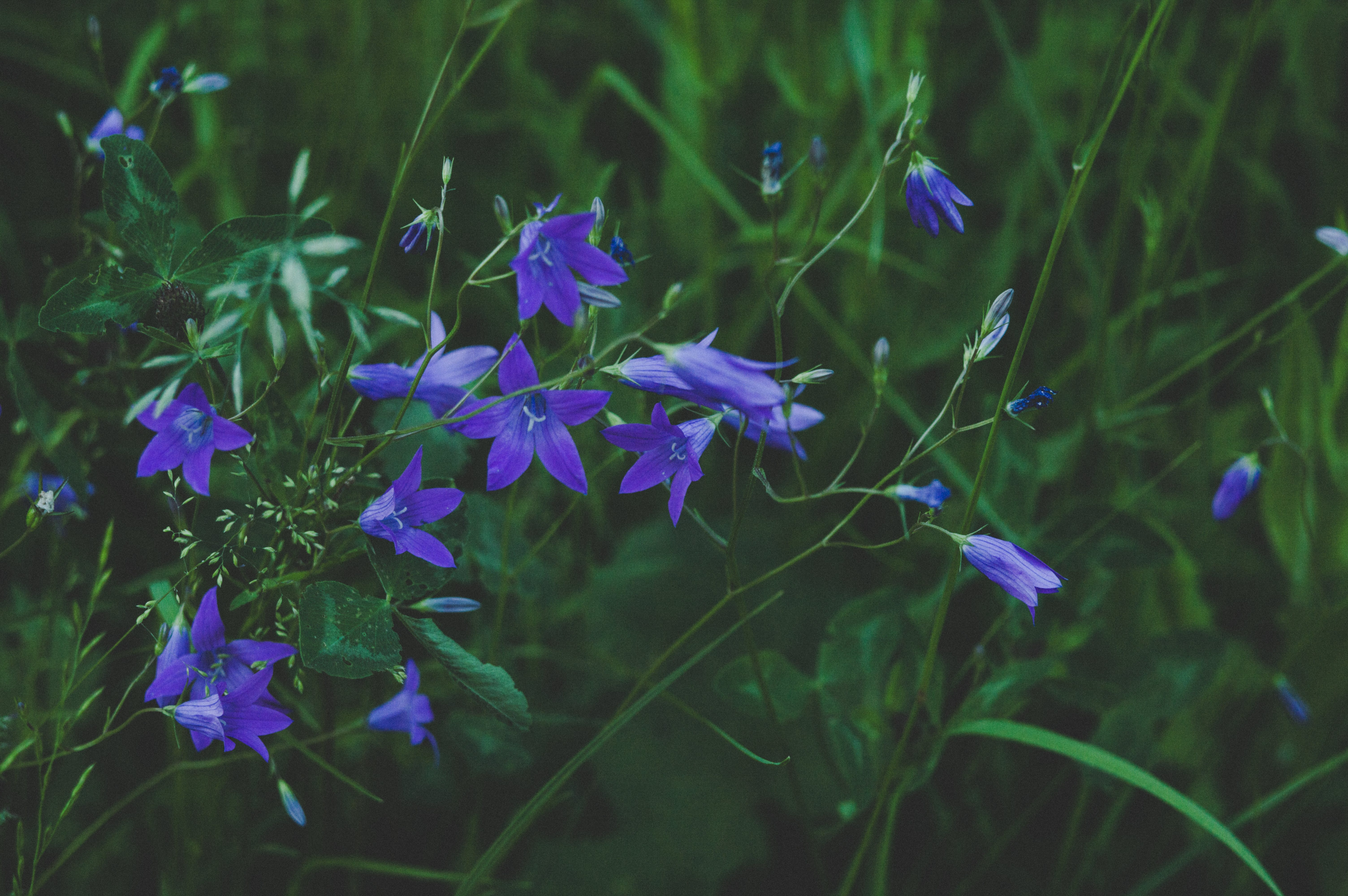 Selective Focus Photography of Blue Flower