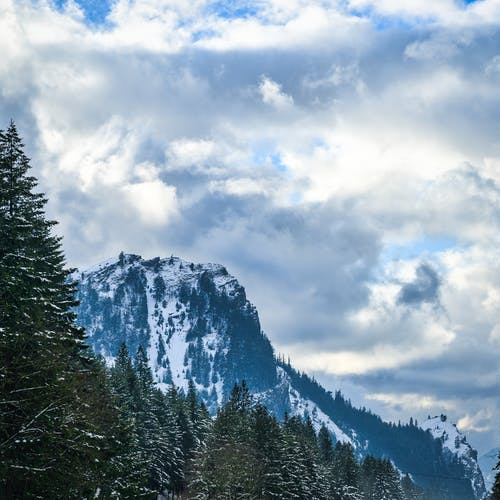 Free stock photo of barbaric, cold, conifer
