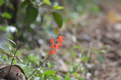 Fotos de stock gratuitas de flor, naturaleza