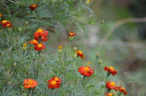 Fotos de stock gratuitas de flor, natural
