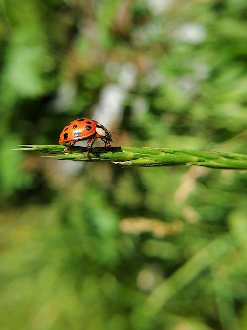 Foto profissional grátis de animais selvagens, ao ar livre, aumento