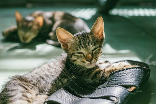 Gratis stockfoto met beesten, close-up, concentratie, huisdieren