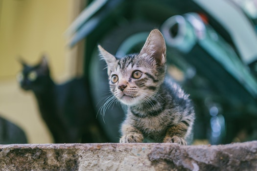 Brown Tabby Kitten With Motorcycle Background