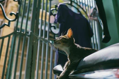 Fotos de stock gratuitas de animal, bigotes, bote, domesticado