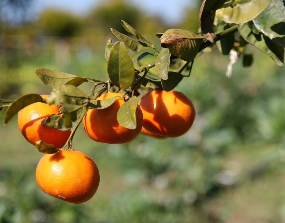 laranjas #seville