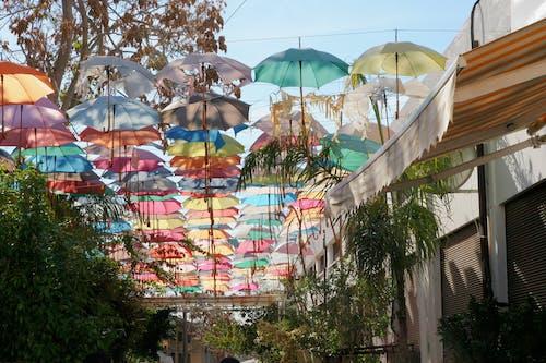 Бесплатное стоковое фото с # зонтик # улица # цветов