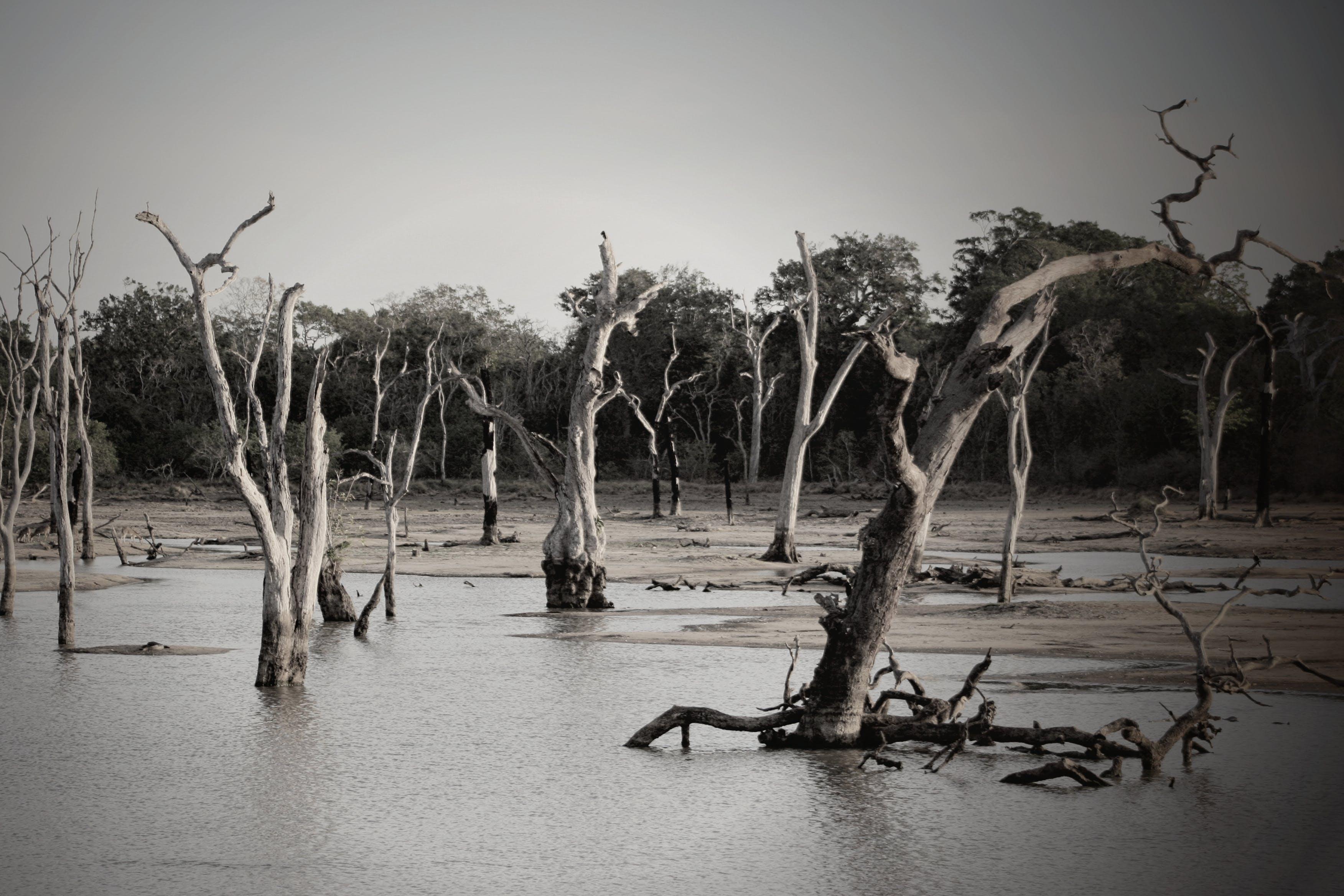 Kostenloses Stock Foto zu überfluteter wald, bäume, dämmerung, flut