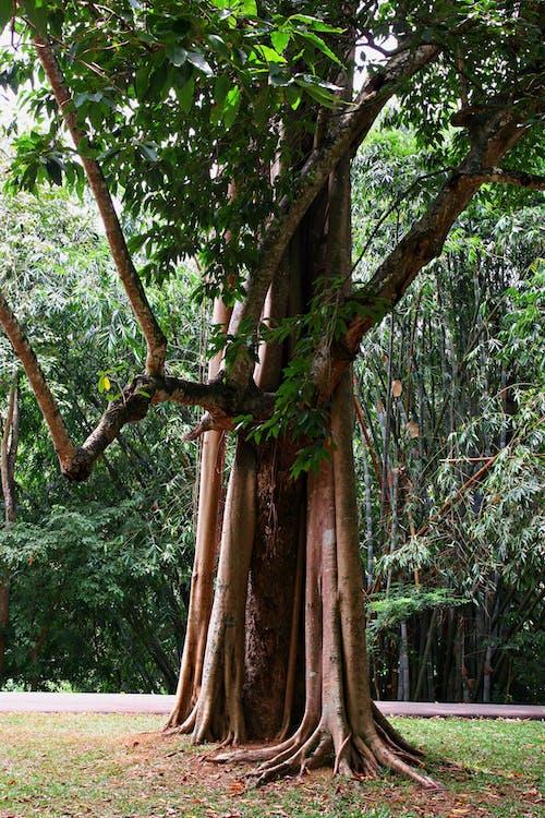 Ảnh lưu trữ miễn phí về cây, chi nhánh, công viên, đường