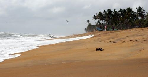 Foto stok gratis air, alam, berselancar, gelombang