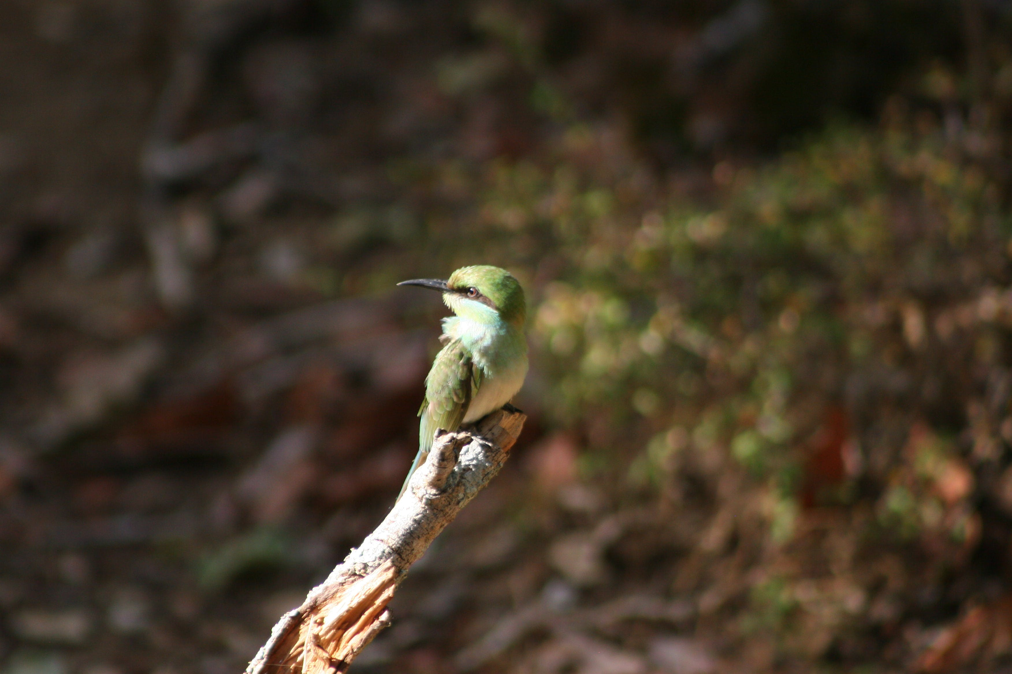 Green Long-beak Bird on Brown Wooden Tree Branch