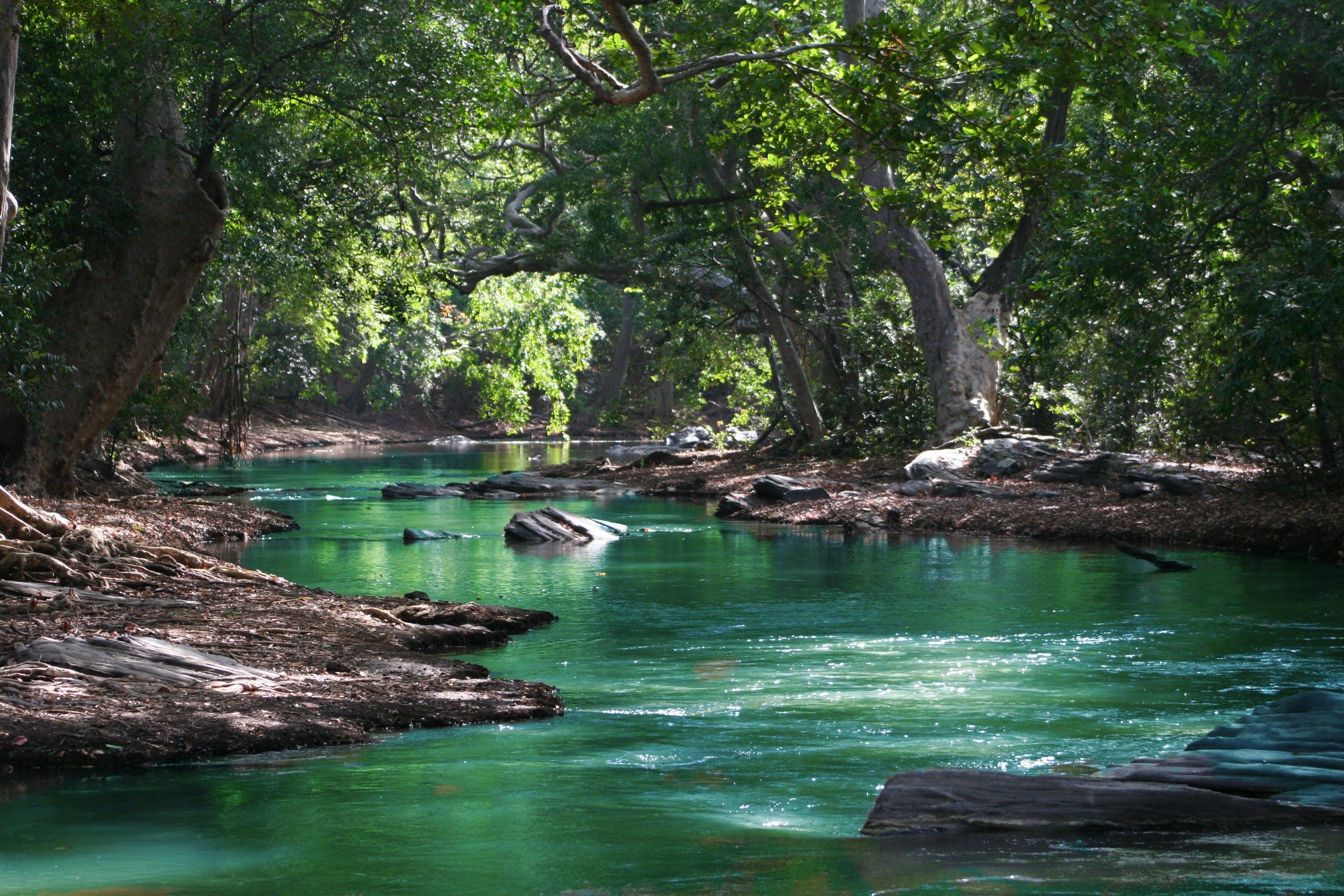 Imagine de stoc gratuită din apă, arbori, concediu, curge