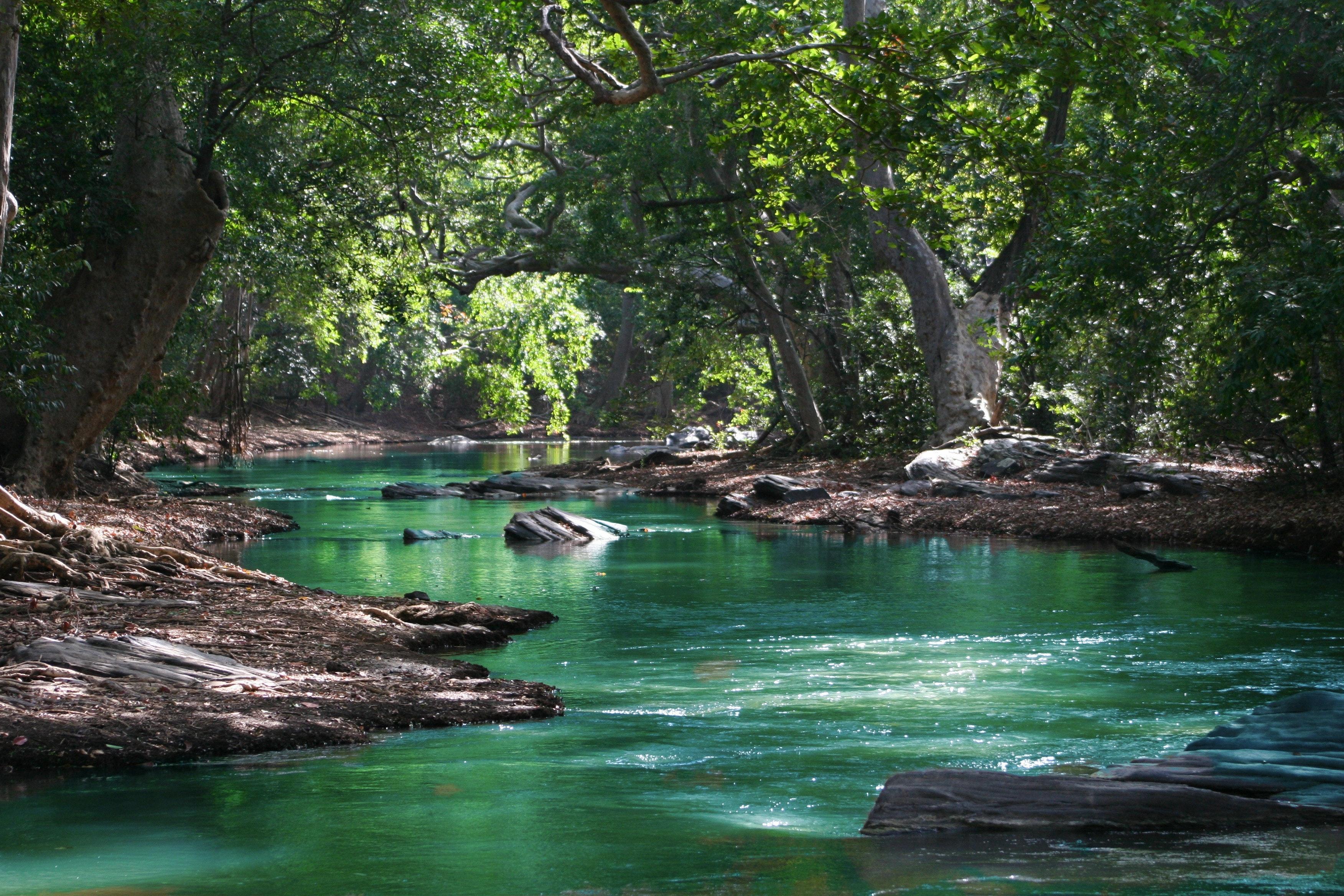 1000+ Amazing River Photos · Pexels · Free Stock Photos  River