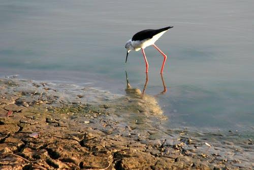 Foto stok gratis air, alam, binatang, cairan