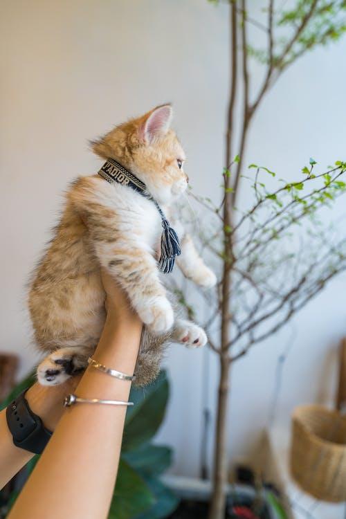 Free stock photo of cat, cute, pet