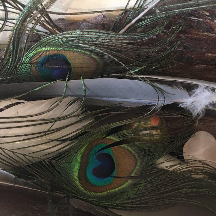 plomes, plomes de paó