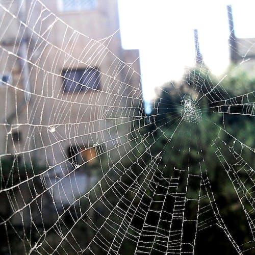 Free stock photo of spider