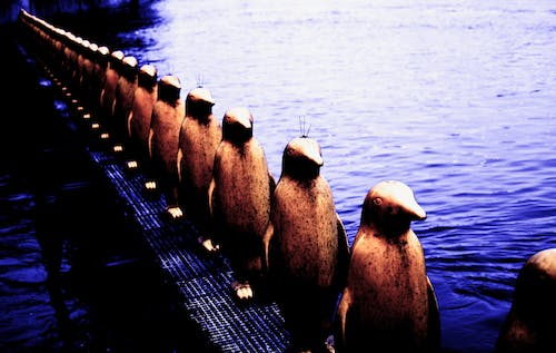 Free stock photo of artistic, moldau, penguins, prague